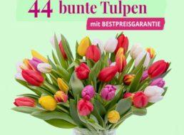Blumeideal: 44 bunte Tulpen für 22,98 Euro frei Haus