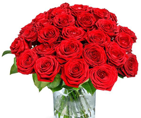 Blumeideal: 20 rote Rosen mit großem Blütenkopf für 19,98 Euro frei Haus