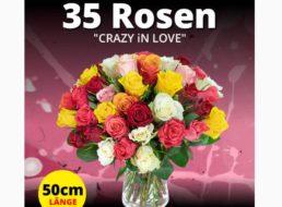Blumeideal: 35 bunte Rosen für 19,99 Euro plus Versand