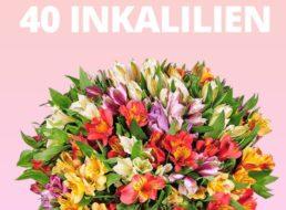 Blumeideal: 40 Inkalilien mit bis zu 400 Blüten für 27,98 Euro frei Haus