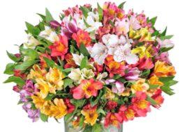 Blumeideal: Strauß mit 300 Blüten für 19,99 Euro plus Versand