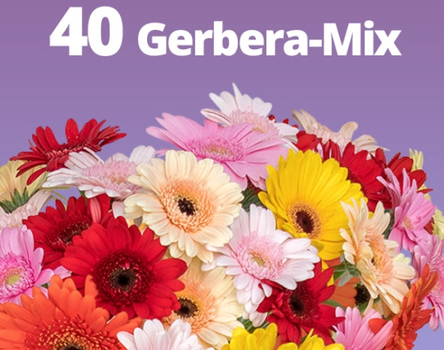Blumeideal: 40 bunte Gerbera für unter 20 Euro