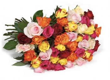 Blumeideal: 42 bunte Rosen für 22,94 Euro frei Haus