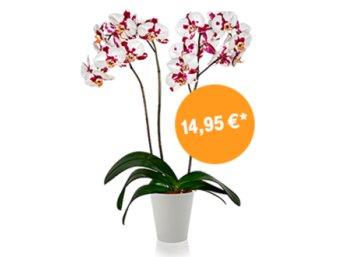 Telekom: Orchideenset für 14,95 Euro frei Haus im Megadeal