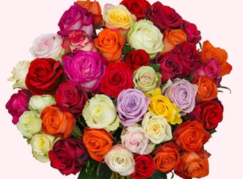 Blumeideal: 33 Rosen für 19,94 Euro samt Lieferung