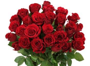 Blume Ideal: 33 rote Rosen für 20,98 Euro frei Haus