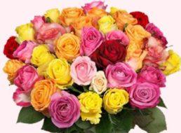 Blumeideal: 28 bunte Rosen für 19,94 Euro frei Haus