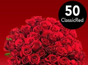 Blumeideal: 50 rote Rosen für unter 30 Euro mit Versand