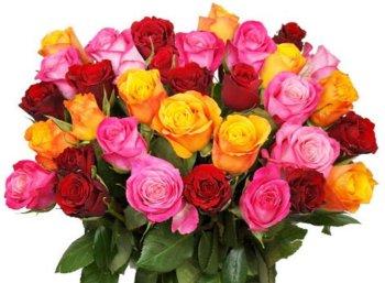 Rosenstrauß: 24 langstielige Rosen für 17,94 Euro frei Haus
