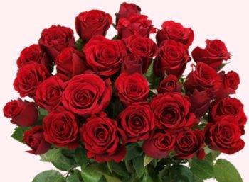 Blumeideal: 44 rote Rosen für 25,94 Euro frei Haus