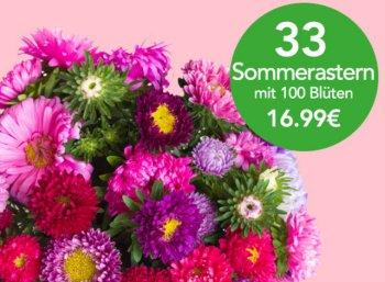 Blumeideal: 33 Sommerastern mit 100 Blüten für 21,94 Euro frei Haus