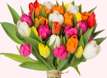 """Tulpenstrauß: 38 Blumen für 20,94 Euro mit Versand bei """"Blume Ideal"""""""